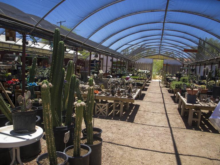 Sous une serre ou se trouve des centaines de cactus