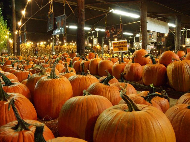 citrouilles en vente pour halloween près de Los Angeles